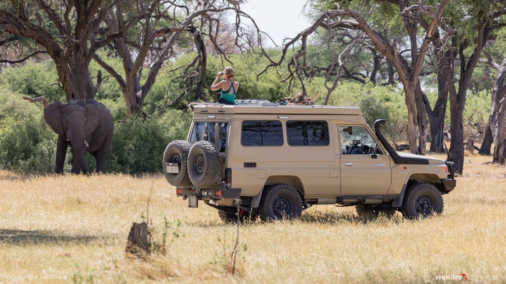 Sheri Game Viewing From the Sunroof in Khwai, Botswana