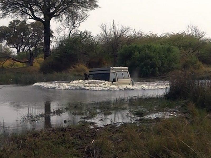 Maggie's First Swim: Deep Water in the Okavango
