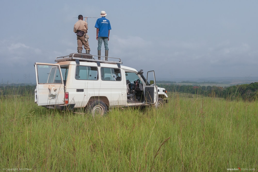 Standing on Top of a Car to Track Mandrills in Lope National Park, Gabon