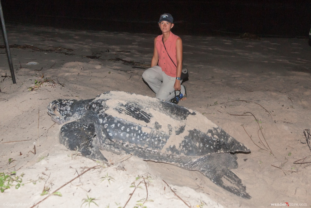 Sheri Beside Leatherback Turtle in Gamba, Gabon