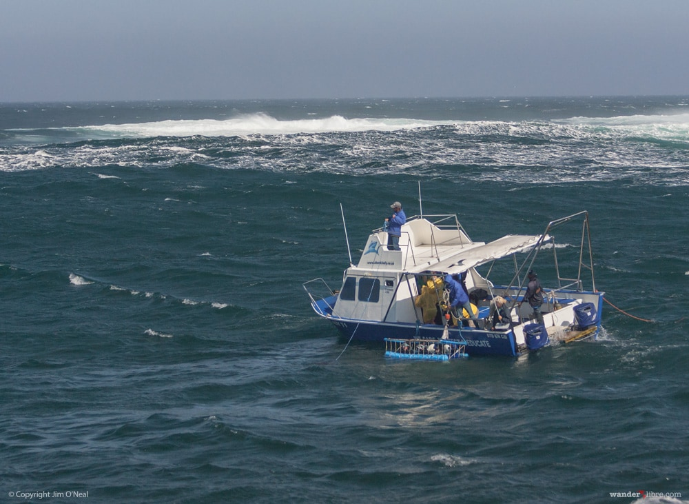 Shark Diving Boat in South Africa