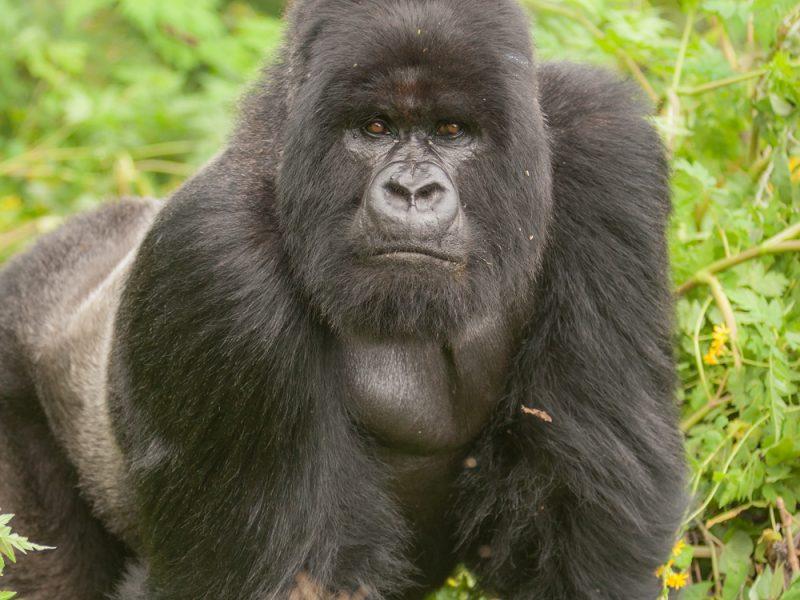 9 Epic African Safari Adventures